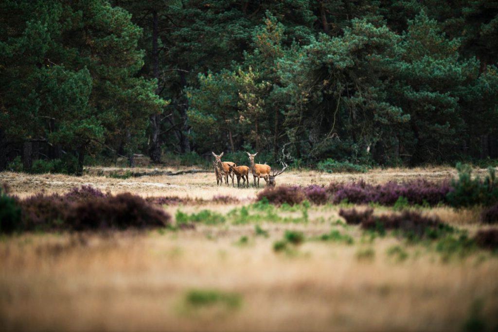 Parcul Național Hoge Veluwe, Olanda