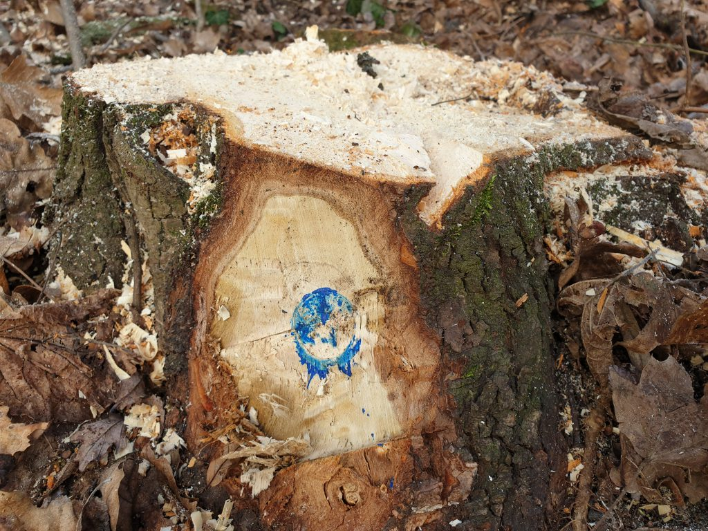 pădurea Băneasa - arbore marcat pentru taiere