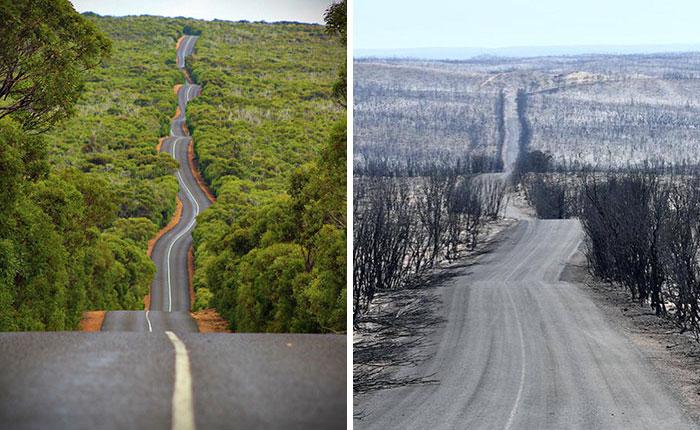 Insula Cangurilor, înainte și după incendii