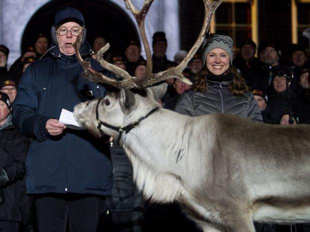 Suedia vrea să construiască poduri pentru reni, pentru a-i feri de accidente
