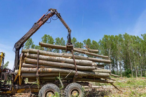 Garda Forestieră Suceava spune că nu a găsit nereguli pe fondul forestier unde au fost agresați un activist și doi jurnaliști