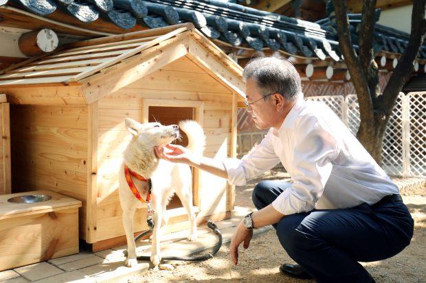 Președintele Coreei de Sud sugerează că țara ar trebui să renunțe la carnea de câine