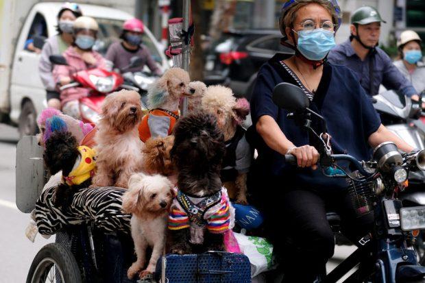 Revoltă în Vietnam după ce autoritățile au ucis cei 12 câini ai unei familii infectate cu Covid-19